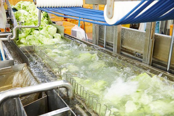 Máy rửa rau tự động - rau củ quả